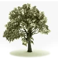 Grow A Money Tree: Create Wealth As Easy As 1, 2, 3